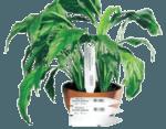 Маркування рослин бірками, етикетками